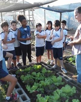 Projeto Horta Orgânica - Foto 30